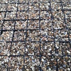 Bases De Serre Et Planchers Polytunnels Cadres Froids Éco Gravel Grids Avec Membrane
